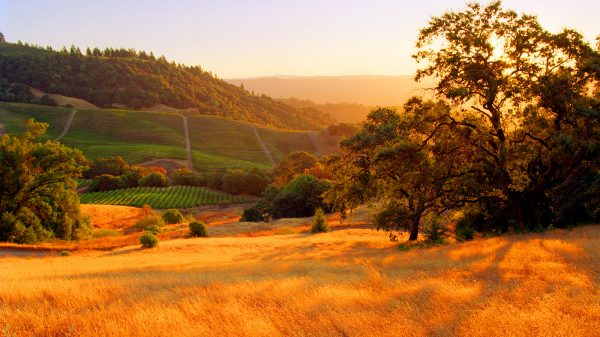 Sonoma Wine Vineyards