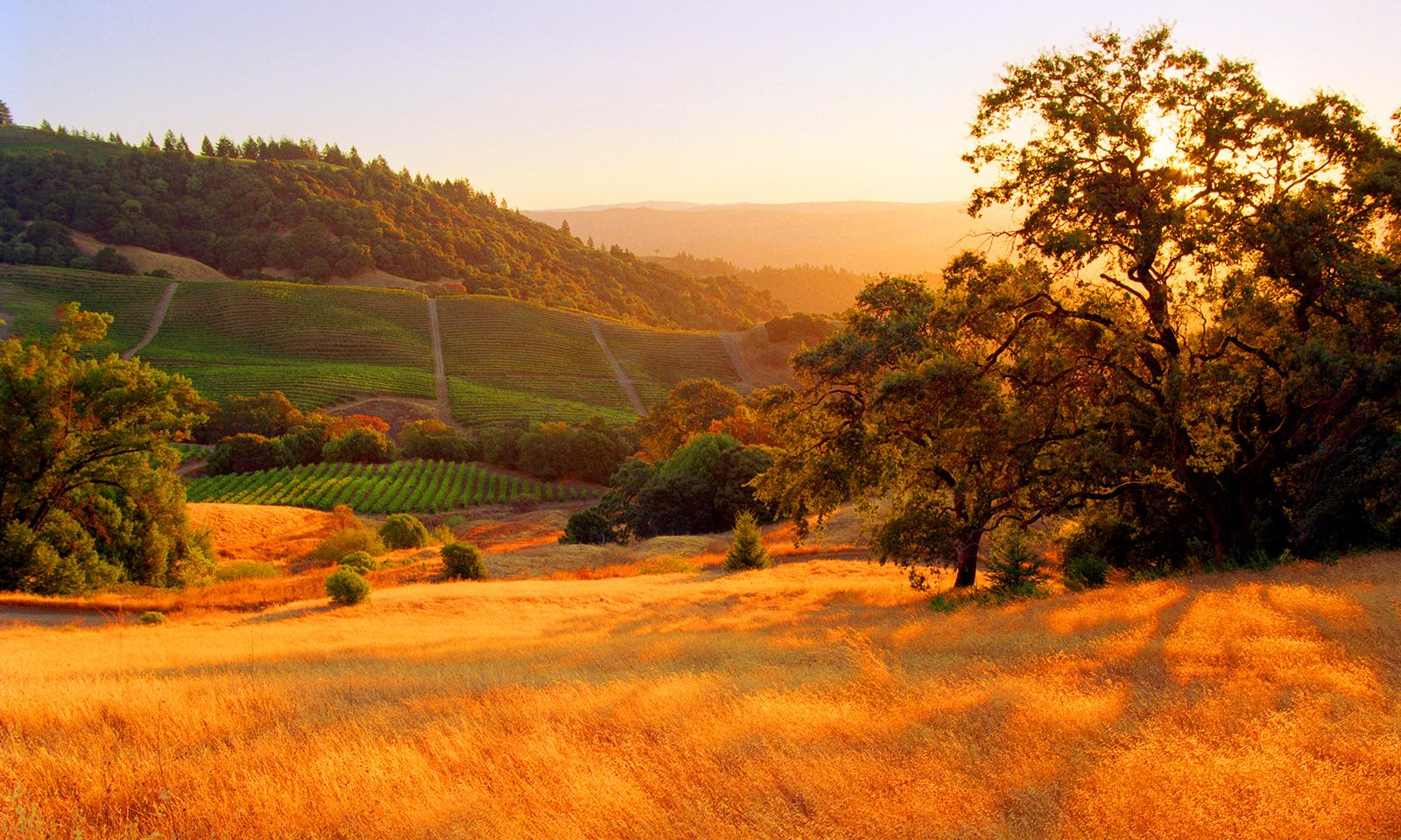 Sonoma Wine Vineyards