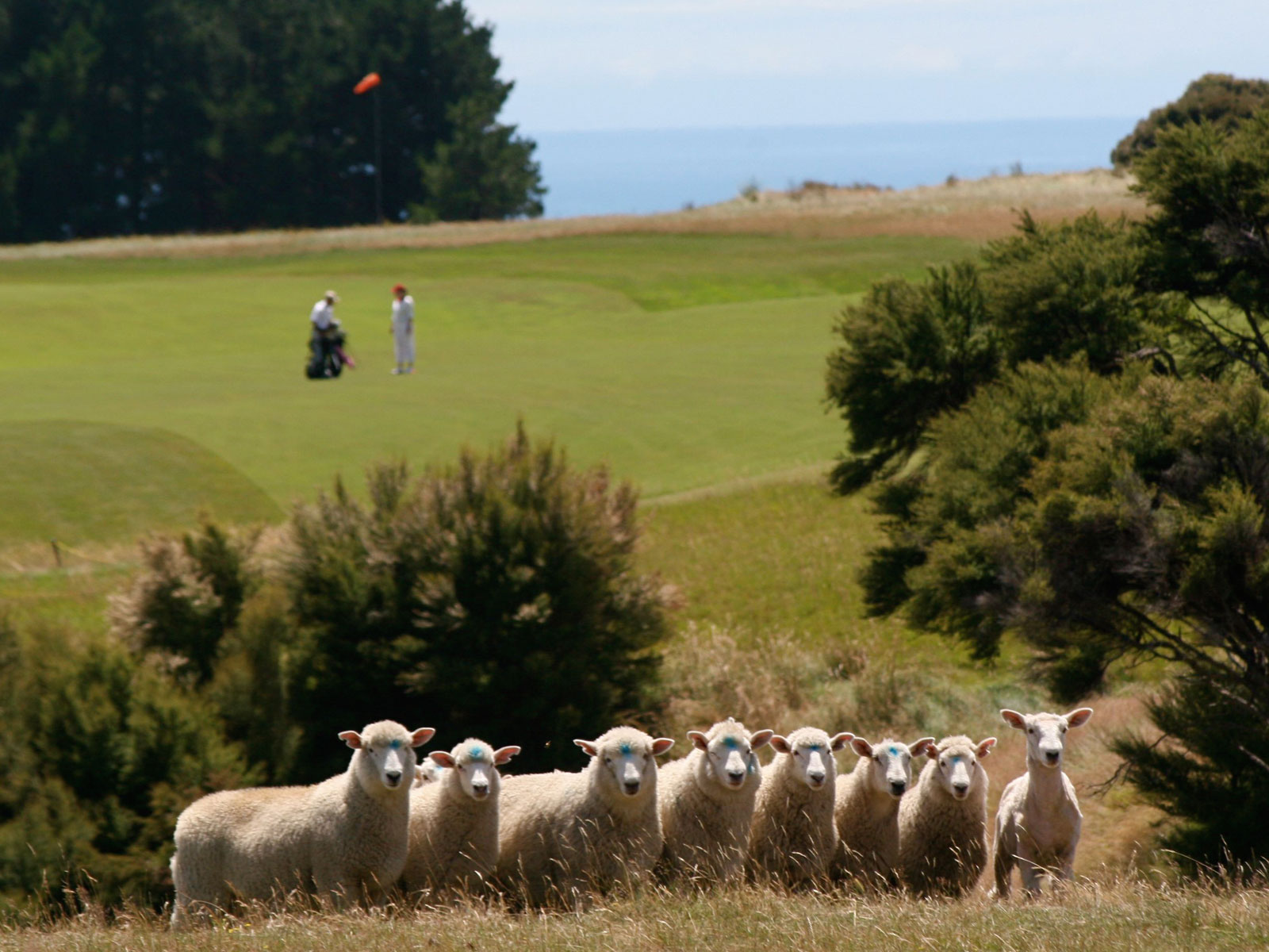 Inspiring Golf Landscapes of New Zealand