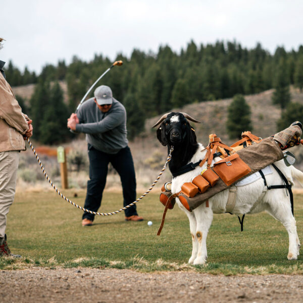 Goat Caddies